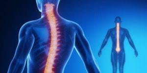 Medula espinal 1