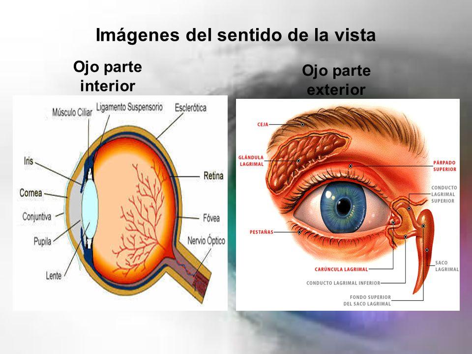 La vista: Definición, importancia, función, partes, anatomía y mucho más