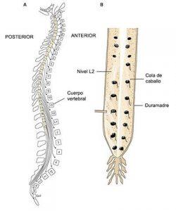 médula espinal 9