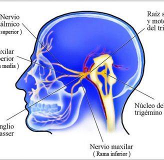 Nervio Trigémino ¿Qué es?, anatomía, función, ramas, enfermedades y más