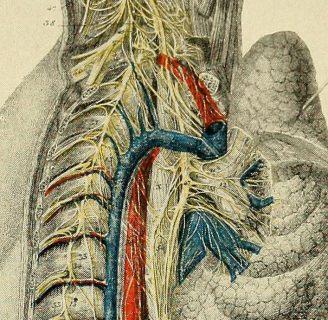 Nervio Vago: Definición, función, enfermedades y más