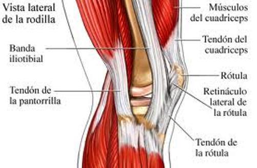 Articulación de la rodilla: anatomía, función, tipo, partes y más