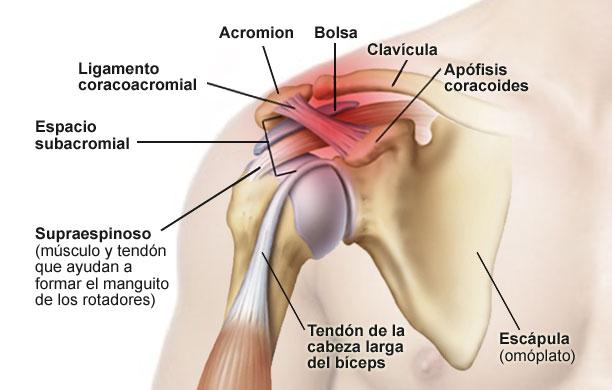 Articulación del hombro: anatomía, función, dolor, lesiones y más