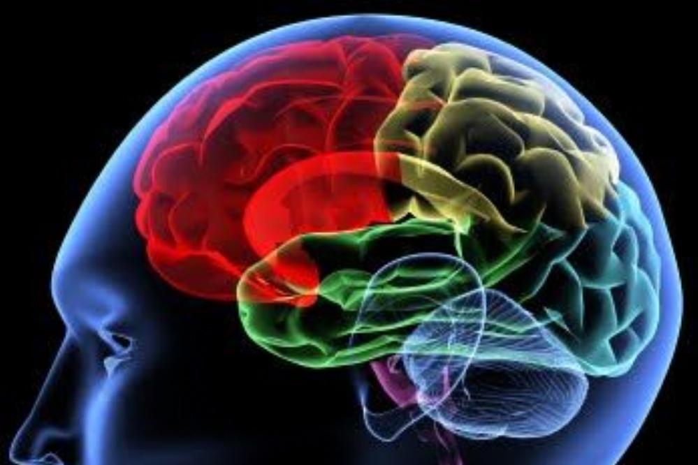 Enfermedades del cerebro: más comunes, síntomas y mucho más