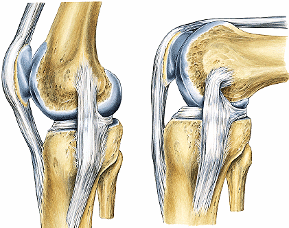 Tipos de articulaciones: anatomía, características, tipos y mucho más