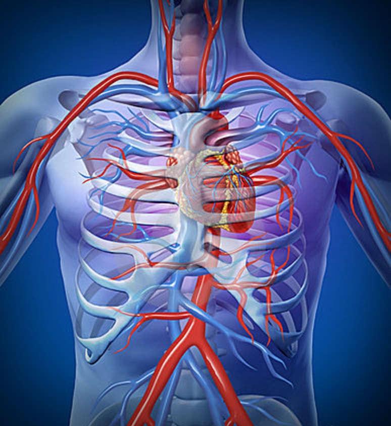 Arteria Pulmonar: Definición, anatomía, función, origen, diámetro y más