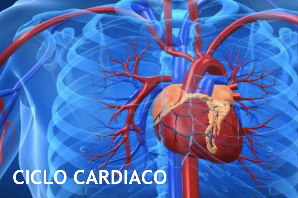 Ciclo Cardíaco: ¿Qué es? Anatomía, fisiología, sus fases y más
