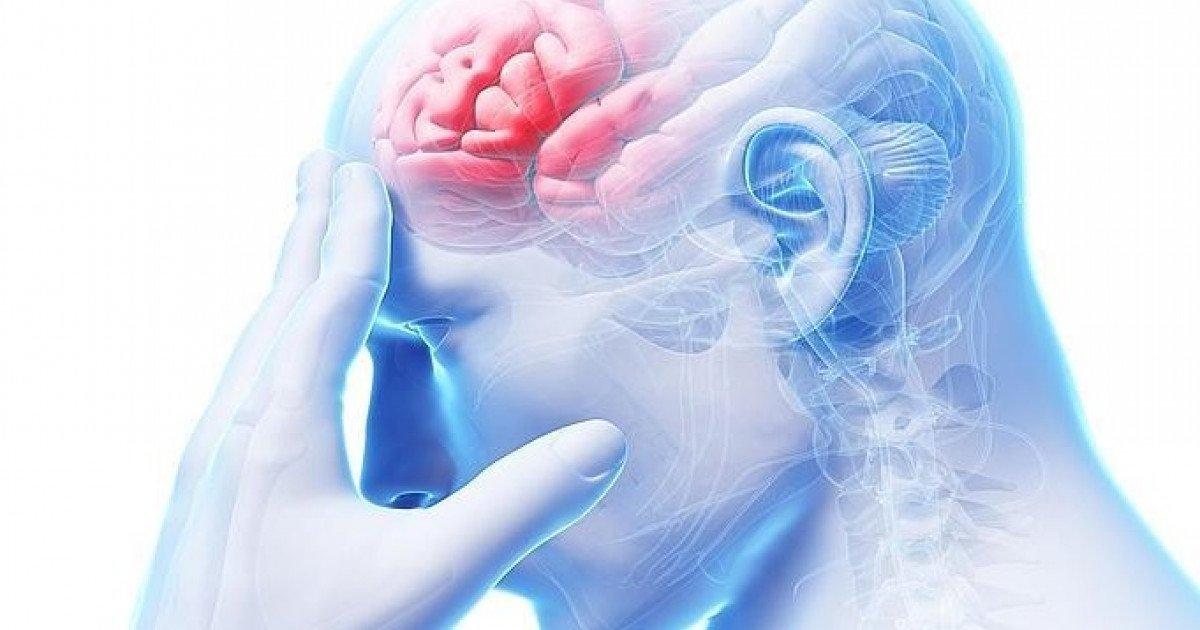 Lóbulo frontal: definición, amatomía, función, áreas, lesiones y ...