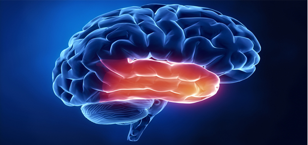 Lóbulo temporal: funciones, lesiones, síntomas, causas, tratamientos