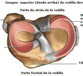 Meniscos de la rodilla: ¿Qué son? Anatomía, operación, lesiones y más