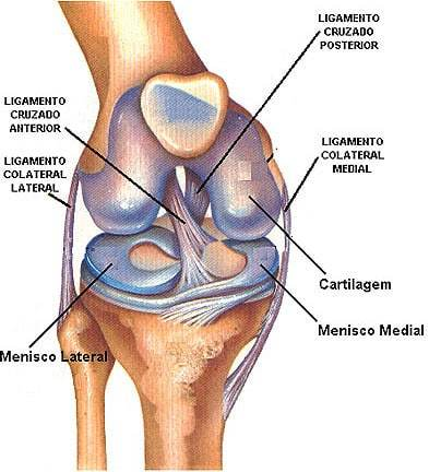 Meniscos: definición, anatomía, ubicación, función, lesiones y mucho más