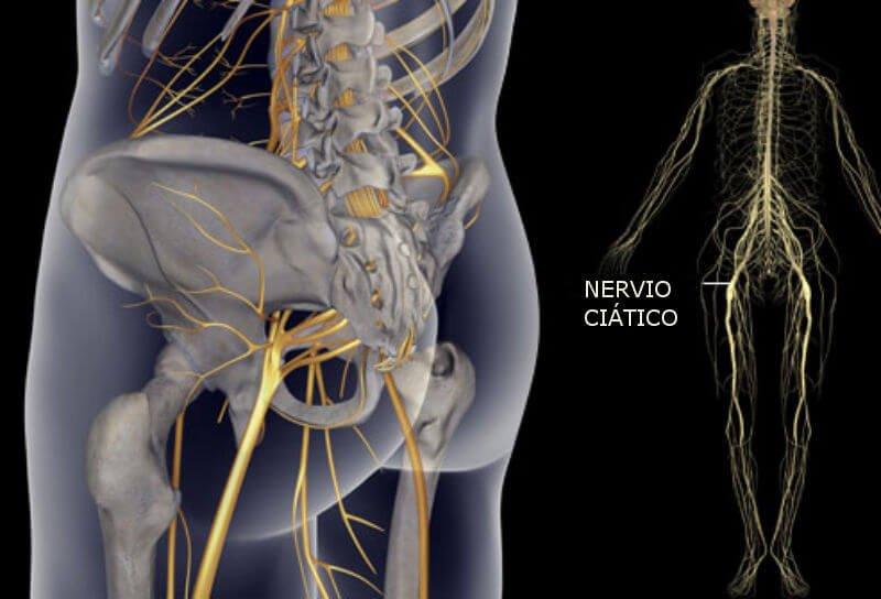 Nervio ciático: ¿qué es? Función, anatomía, y mucho más