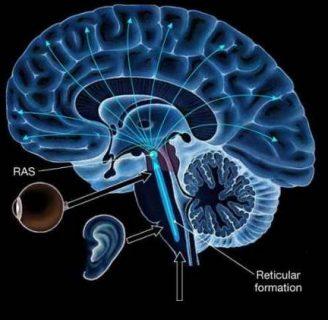Conoce todo sobre el sistema activador reticular ascendente