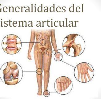 Sistema articular: ¿qué es? Funciones, anatomía, fisiología, generalidades