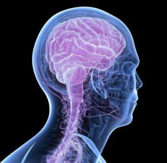 Sistema Nervioso Central: ¿qué es?, caracteríticas, importancia, función y mucho más