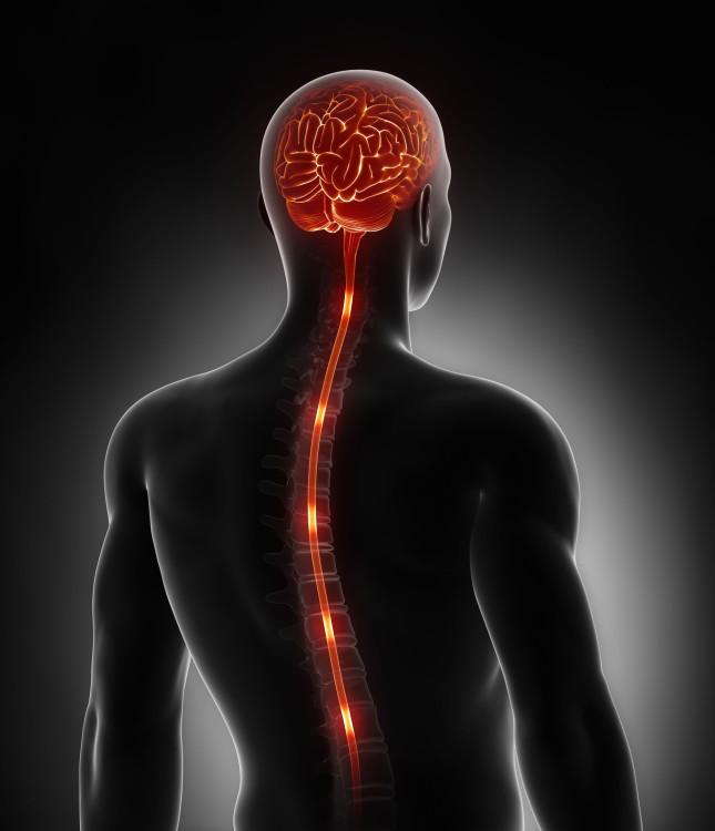 ver-Sistema Nervioso Central-2