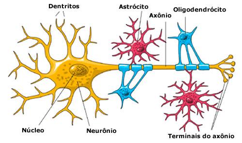 ver-Sistema Nervioso Central-31