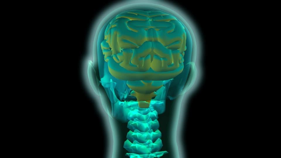 ver-Sistema Nervioso Central-4