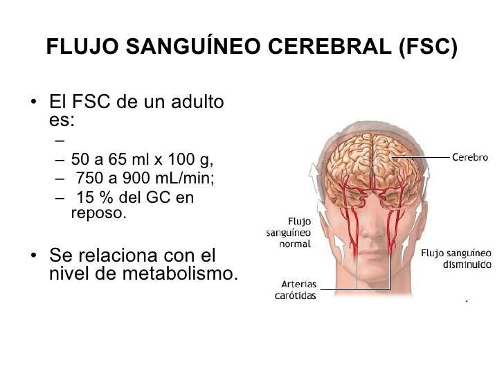 ver-Sistema Nervioso Central-68