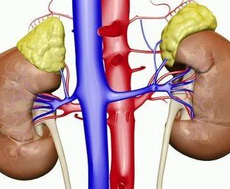 Vena renal: ¿qué es? Función, izquierda retroaórtica y más