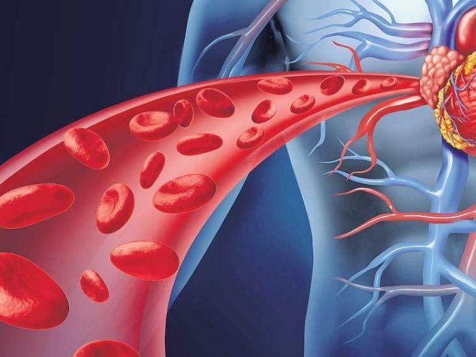 Arteria braquial: anatomía, función, ubicación y mucho más