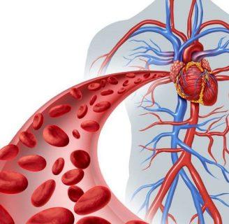 Circulación sanguínea: ¿Qué es? Proceso, tipos, problemas, remedios naturales y mucho más