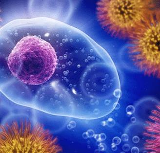 Conozcamos todo sobre las hormonas HCG y más