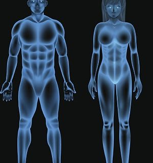 Hormonas Sexuales: Definición, funciones, tipos, producción y mucho más