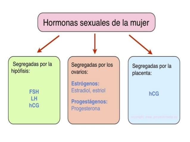 Hormonas sexuales masculinas y femeninos