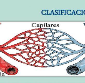 Vasos Capilares: Definición, función, rotos, en la cara y más
