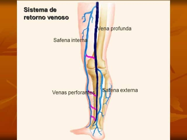 Vena safena: ¿qué es? Anatomía, función, dolor y mucho más