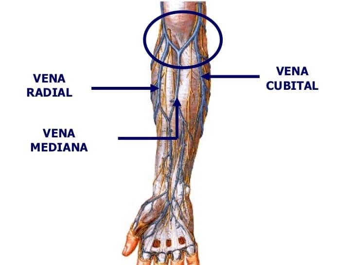 Venas: ¿qué son? Anatomía, función, tipos, principales y mucho más