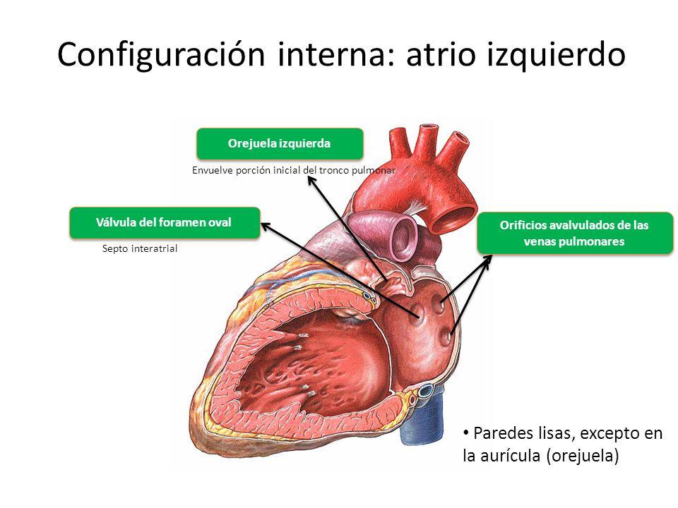 Ventrículo Izquierdo: Definición, anatomía, función y mucho más