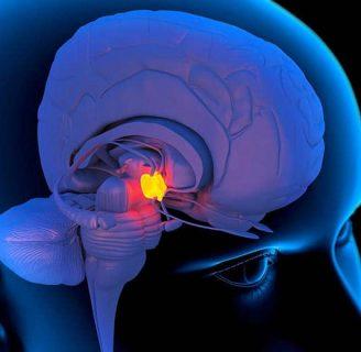 Glándula Pineal: Anatomía, función, beneficios, y mucho más