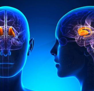 Hormonas del hipotálamo: ¿qué son?, ¿cuáles son?, funciones y más
