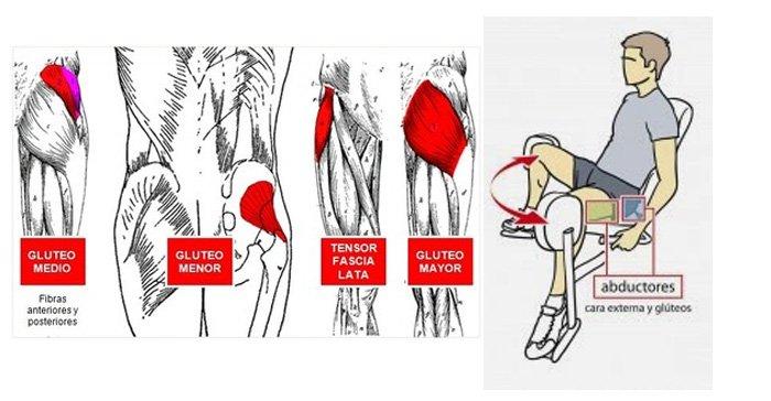 Músculos abductores
