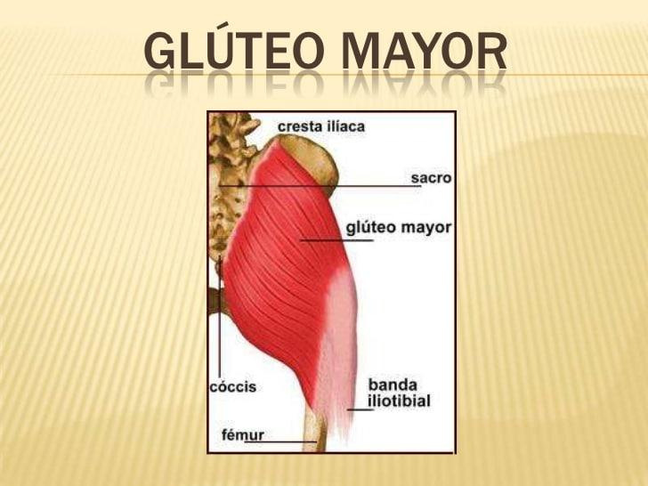 Músculos del glúteo: origen función, inserción y más