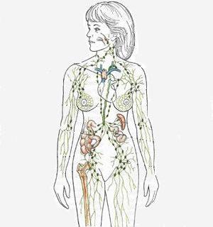 ¿Cuál es la función del sistema linfático? Descúbrelo aquí.