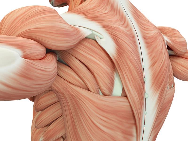 Contracción muscular: ¿Qué es? Fisiología, tipos y mucho más