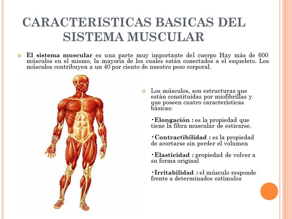 Sistema muscular y óseo: Definición, estructura, función y más
