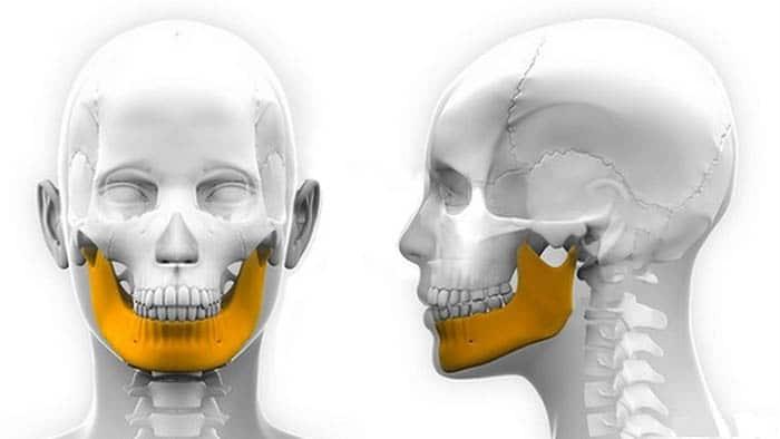 Huesos de la Cara: anatomía, función, ¿cuántos son? Y mucho más