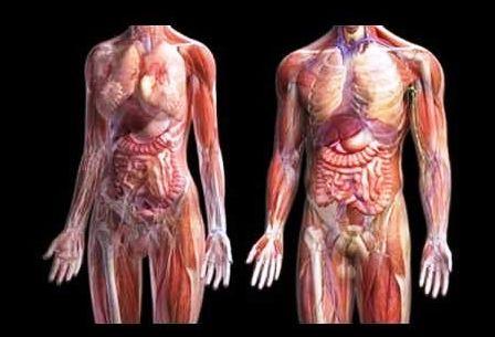 músculo flexor