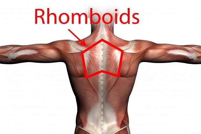 Aprende todo sobre los Músculos romboides Aprende todo sobre los ...
