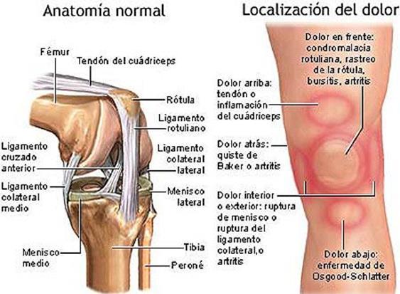 Tendones: ¿qué son? Anatomía, función, lesiones y mucho más Tendones ...