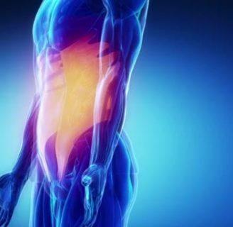Músculos oblicuos: ¿qué son? Ejercicios, del abdomen y más