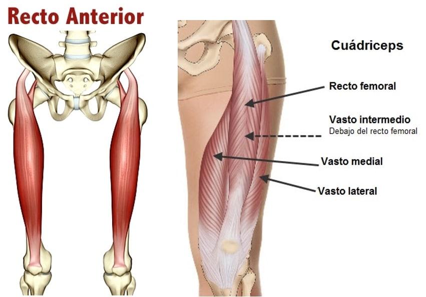 Músculo cuádriceps: deficinión, función, origen e inserción y más