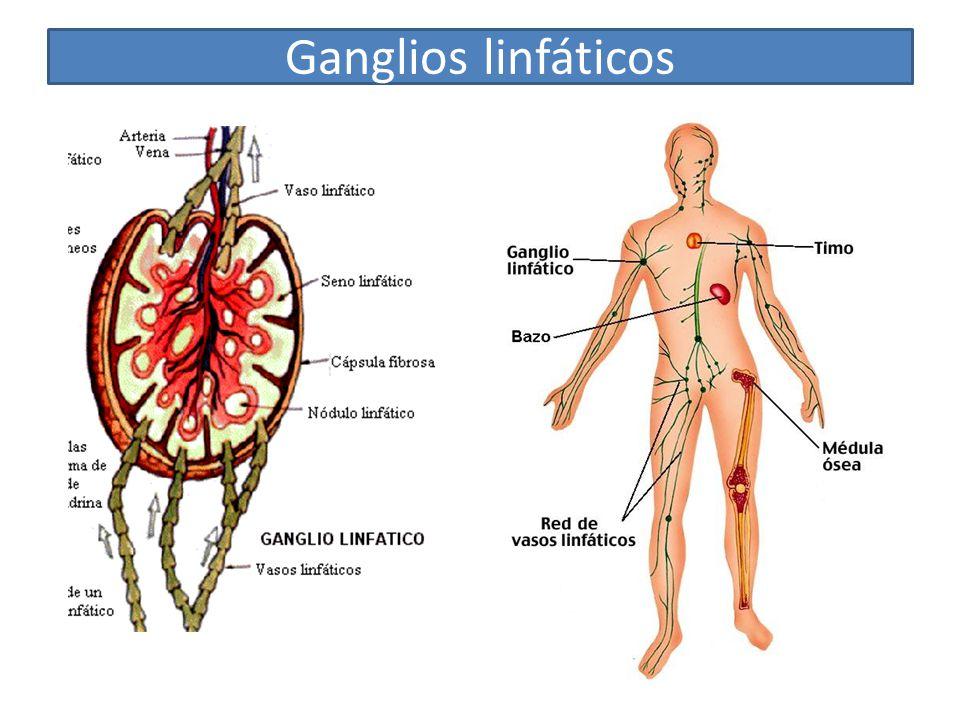 Gánglios linfáticos inflamados en el cuello: causas, síntomas y más