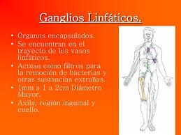 Gánglios linfáticos-1
