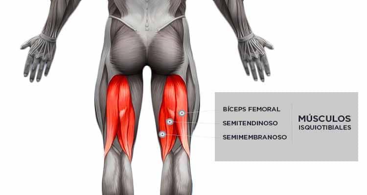 Músculos isquiotibiales: ¿cuáles son? Anatomía, funciones y más