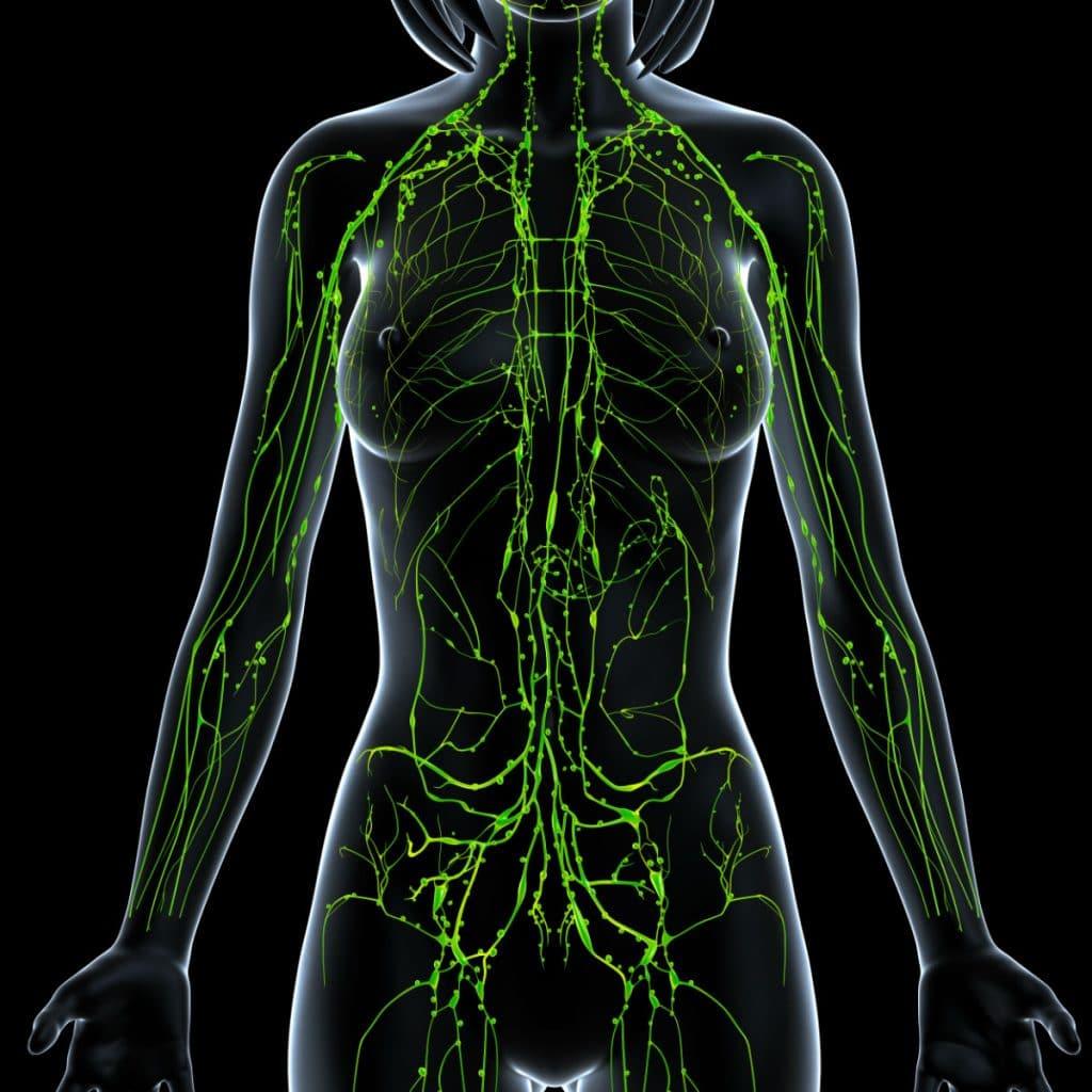 Vasos Linfáticos: Definición, anatomía, función y mucho más